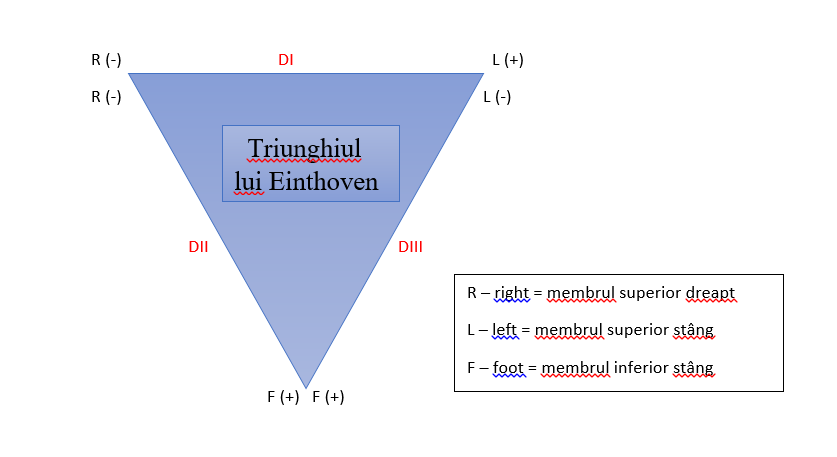 triunghiul echilateral Einthoven