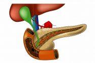 Pancreasul anatomie