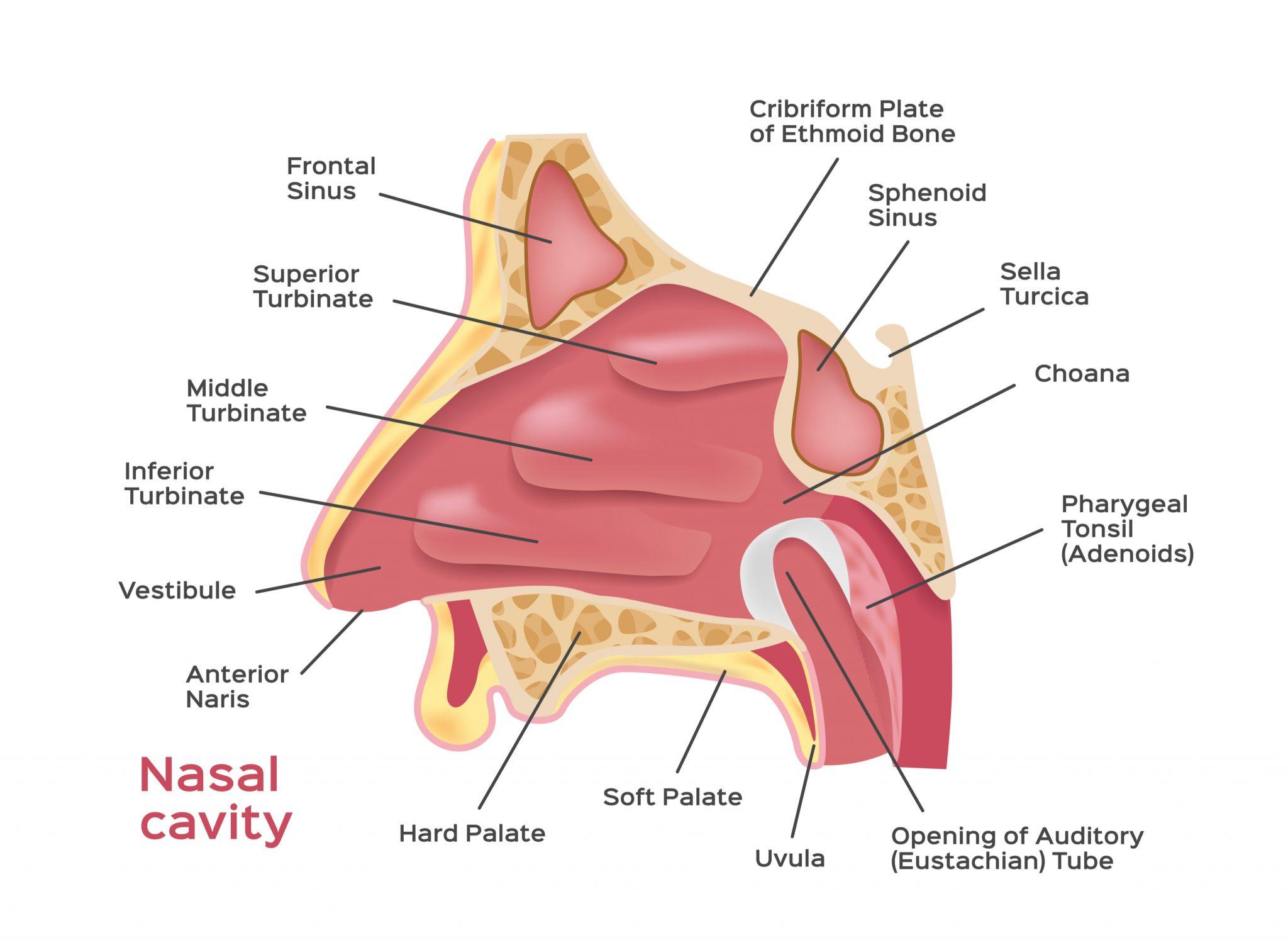 Totul despre sinuzita: Cauze, simptome si tratament