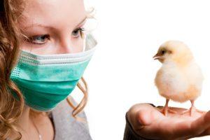căi de infestare aviară a