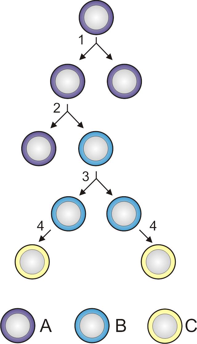 Intrebari frecvente celule stem – InScientiaFides celule stem