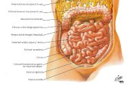 intestinul suv=btire